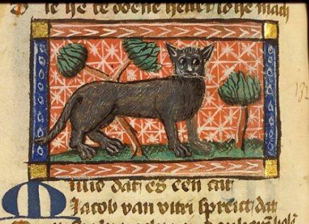 kot w średniowieczu